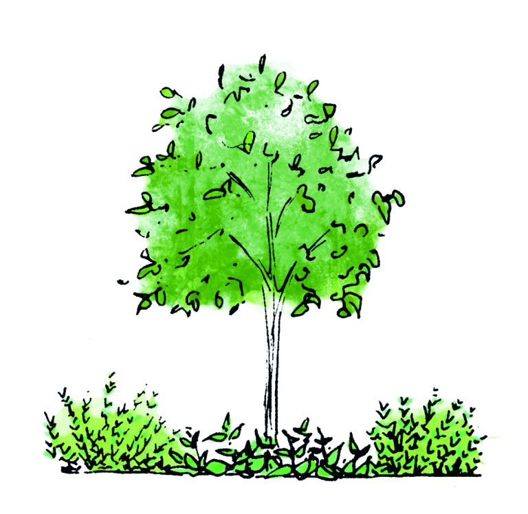 arbres plantes forêt jardin comestible