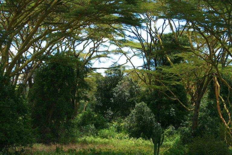 forêt jardin Ulmer