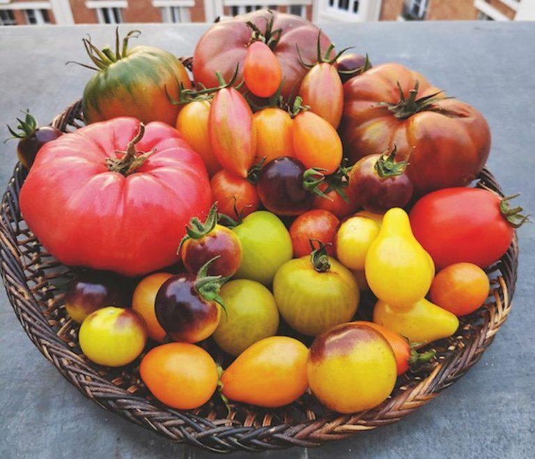 tomates valéry tsimba abondance variétés