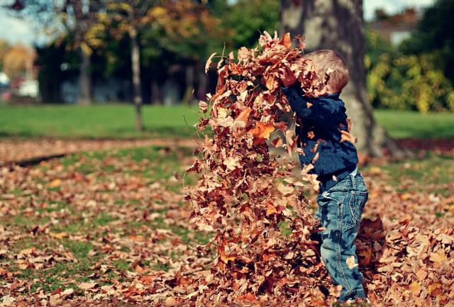 enfants forêt jeux école