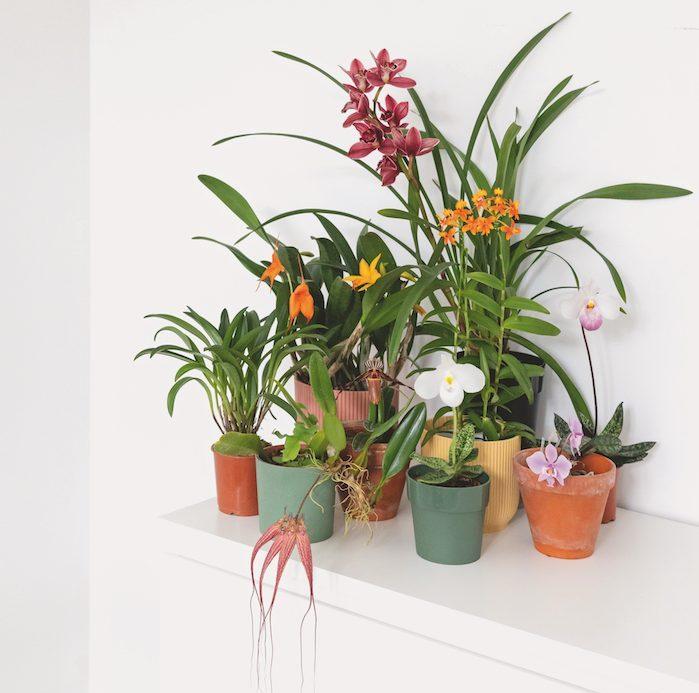 orchidées choisir son pot romain maire