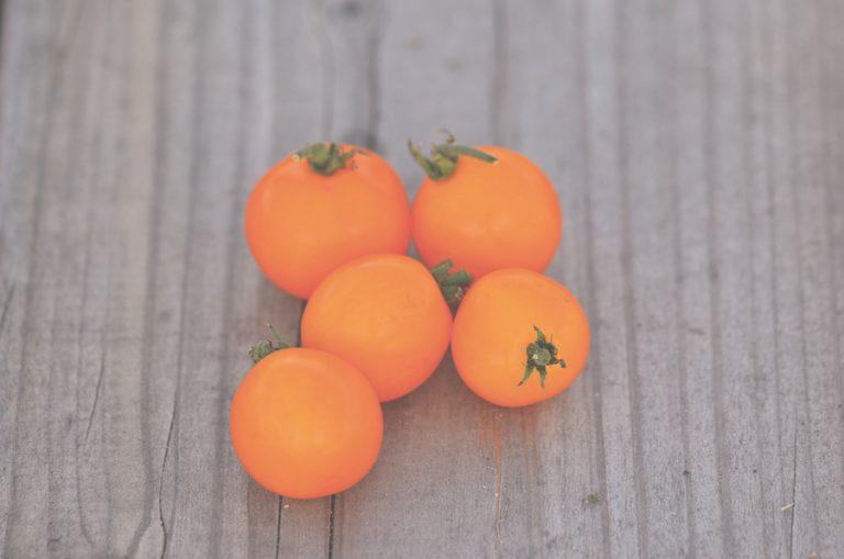 tomate variété orange semences paysannes